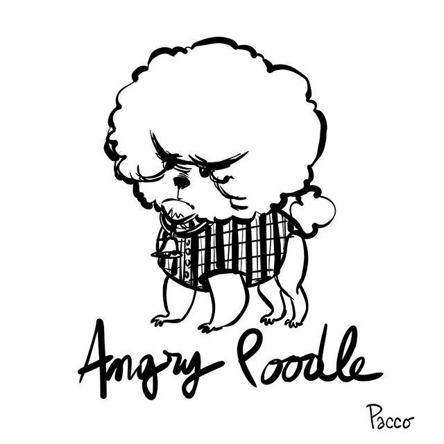 #angry #poodle #ink #pacco